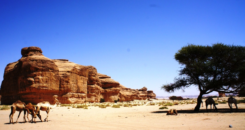 Tourism in Saudi Arabia